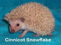 Cinnicot Snowflake Hedgehog - HEDGEHOGS by Vickie