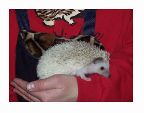Pinot Hedgehogs - HEDGEHOGS by Vickie