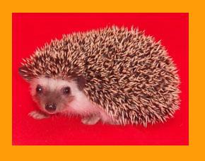 Salt & PepperHedgehog - HEDGEGHOGS by Vickie