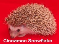 Cinnamon Snowflake Hedgehog - HEDGEHOGS by Vickie