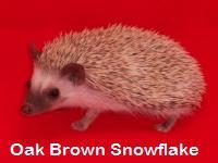 Oak Brown Snowflake Hedgehog - HEDGEHOGS by Vickie