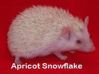 Apricot Snowflake Hedgehog - HEDGEHOGS by Vickie