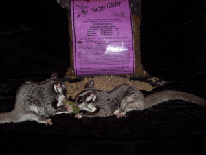 Happy Glider Sugar Glider Food Supreme - Hedgehogs by Vickie