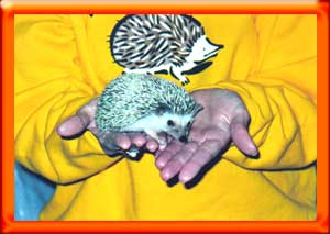 Taking care of a hedgehog - HEDGEHOGS by Vickie