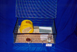 Hedgehogs for sale - Custom Hedgehog Cages - Hedgehogs by Vickie