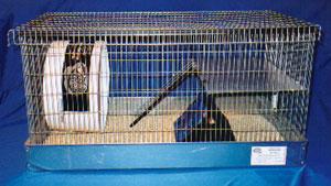 Toasty Tents Hedgehog Sleeping Tents - Hedgehogs by Vickie