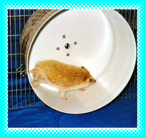 Hedgehog Whisper Wheels Exercise Wheel - HEDGEHOGS by Vickie